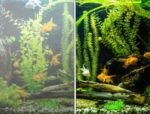 Reasons for white cloudy water in aquariums and possible solutions
