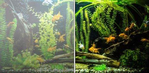 White foggy aquarium water tuned into clear water
