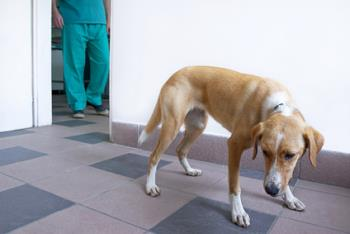 This dog does not know about benefits of spaying and neutering.. yet.