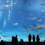 Best Aquarium for Beginner