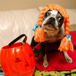 Training a Dog to Wear a Halloween Costume