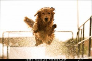 Dog sports may help to solve obedience problems