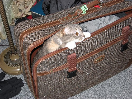 Take you cat with you on vacation