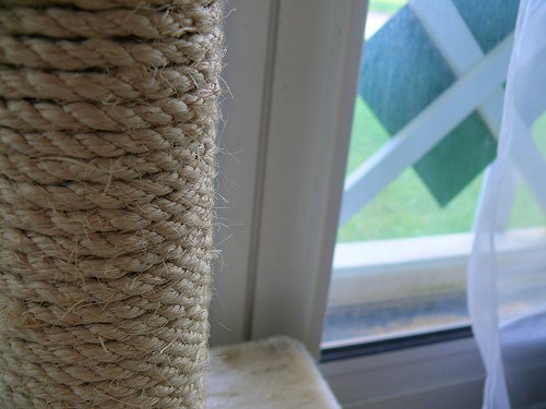 Cat scratching post placed by a window
