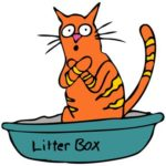 How to find the best cat litter type for your cat