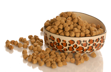 cat dry kibble food bowl