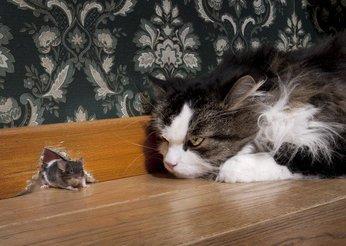 pet pride cat litter ingredients