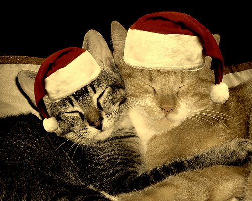 Two Cats Are Happy On Christmas Wearing Santa's Hat