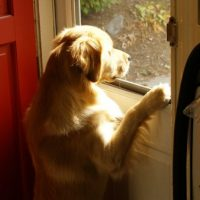 How to Prevent a Dog From Asking In and Out at Night