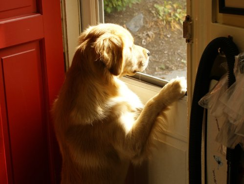 Dog wants to go out!