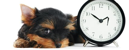 Female dogs may have irregular cycles