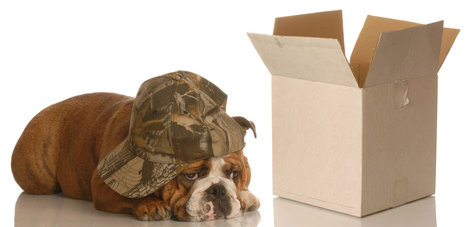 Dog sitting next to a box, to be shipped away while female is in heat