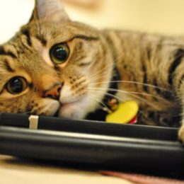 a bored indoor cat hugging a laptop
