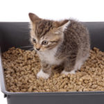 Cat Litter Box Care for Beginners