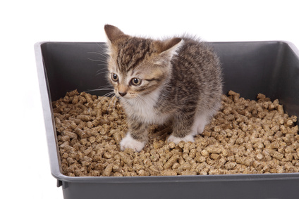 Kitten In A Litter Box
