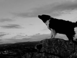 A dog howling