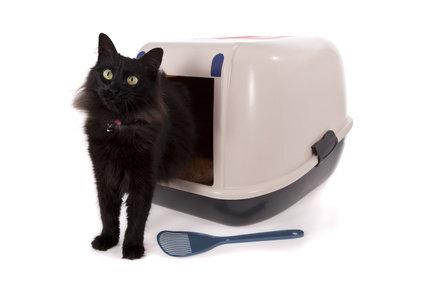 Covered cat litter box