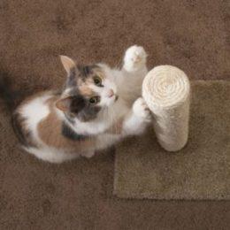 Cat scratching post