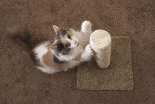 Cat Scratch Animation Cat Scratching Post