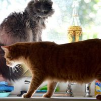 4 ways to keep your cat off the kitchen counter