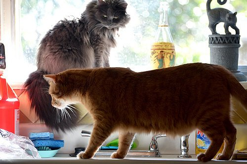 Can you keep these two cats off the kitchen counter?