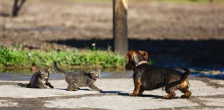 new experience causes stress in cats
