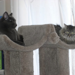 Two cats charing a cat tree friendly