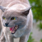 Do you recognize these 9 signs of stress in cats?