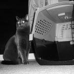 Do You Keep Cat Carrier in the Attic?