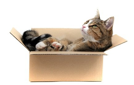 environmental enrichment for indoor cats. Black Bedroom Furniture Sets. Home Design Ideas