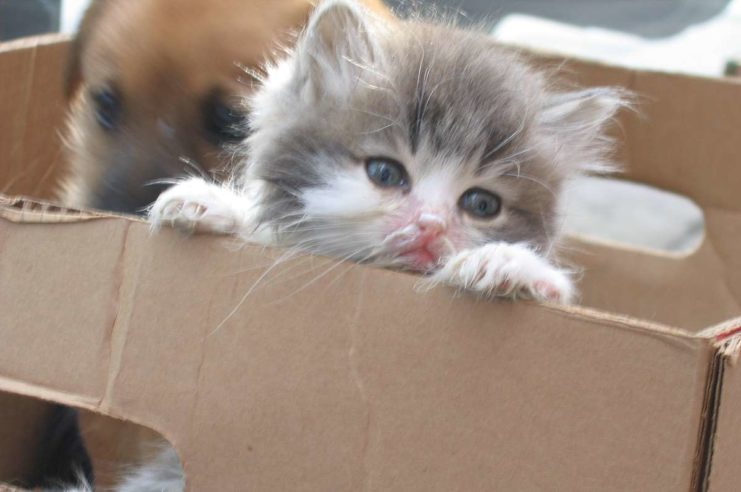 buying a kitten from cardboard box