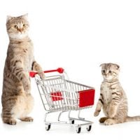 Adult Cat or Kitten – Which is a Better Choice?
