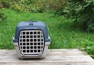 Cat isnide a cat carrier