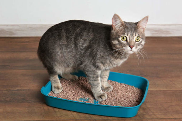 cat in a litter box with too small dimensions