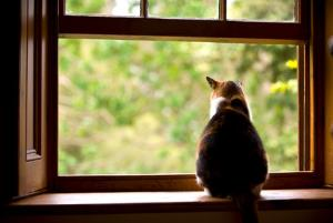 Cat tryong to escape and looking through a window