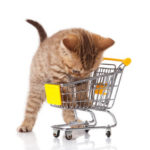How to Choose Cat Accessories and Stuff Your New Pet Will Need