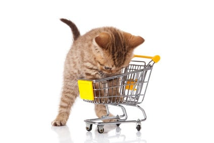 Cat shopping for accessories