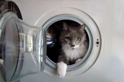 DO you think it's safe putting a cat in a washing machine?