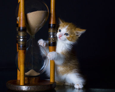 If you want to get a healthy kitten - do not rush!