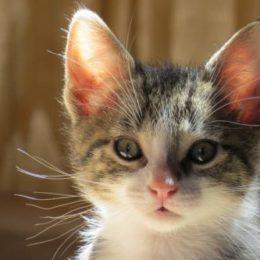 a healthy kitten