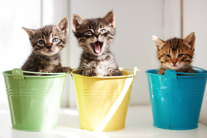 Three healthy kittens