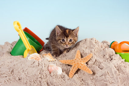 Outdoor cat will have benefits form having a litter box indoors