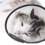 How to care for a cat after surgery