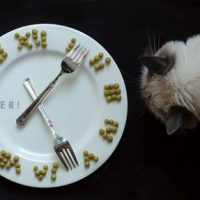 How often should you feed a cat
