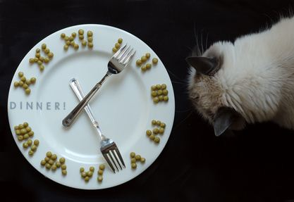 Feeding schedule is important in your cat's eyes.