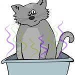 How to get rid of cat litter box odor?
