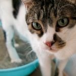 Why your cat is not using a litter box