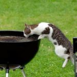 How to Feed Your Cat – Cat Feeding Guide for Beginners