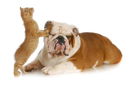 Can you introduce a kitten to a dog so they become friends?