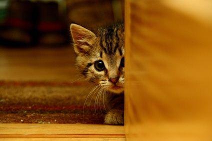 New kitten afraid of his owner